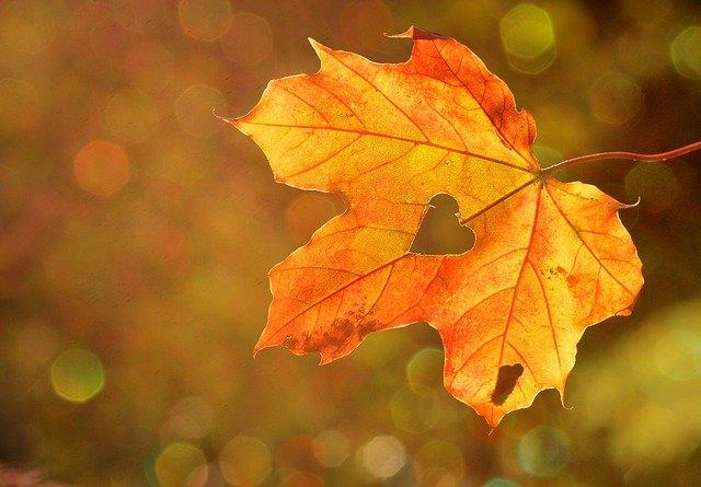 jesieni-podbicie-zaplecz-statlink-849.jpg